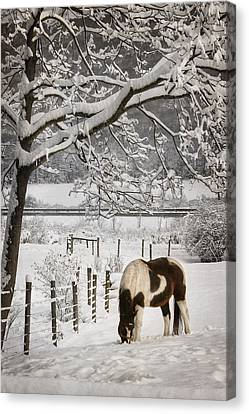 Paint In The Snow Canvas Print by Lori Deiter