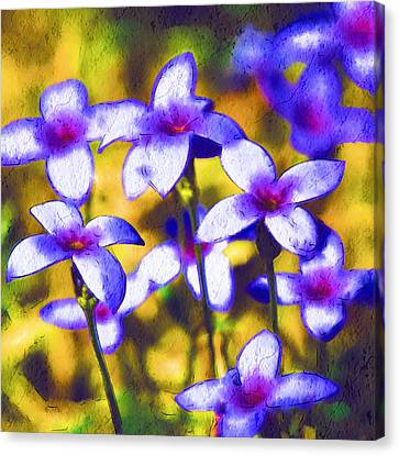 Painted Bluets Canvas Print by Kathy Clark
