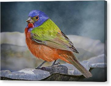 Painted Bunting In April Canvas Print by Bonnie Barry