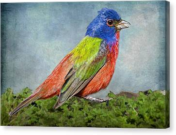 Painted Bunting Portrait Canvas Print by Bonnie Barry