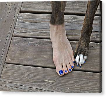 Painted Toenails And Dog Claws Canvas Print by Harold Bonacquist