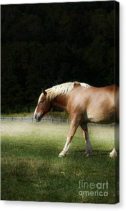 Pale Horse Canvas Print by Kathleen Struckle