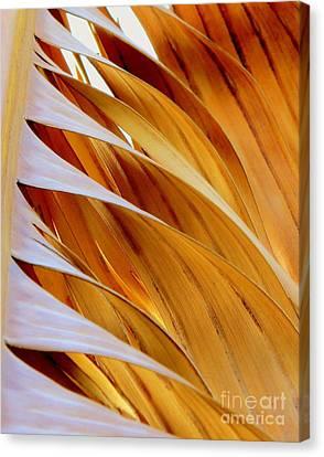 Palm Frond Canvas Print by Ranjini Kandasamy