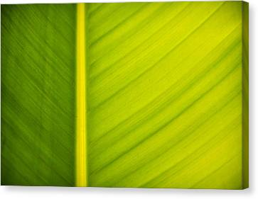 Palm Leaf Macro Abstract Canvas Print by Adam Romanowicz