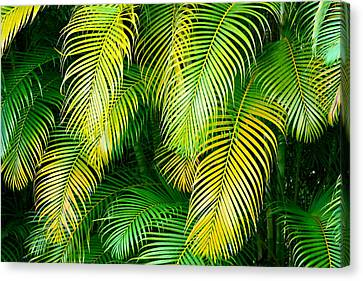 Palm Leaves In Green And Gold Canvas Print by Karon Melillo DeVega