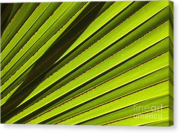 Palm Lines Canvas Print by Mike  Dawson