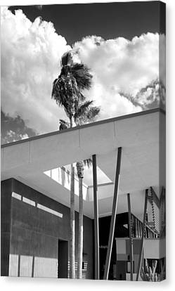 Palm Springs Animal Shelter Palms Bw Palm Springs Canvas Print by William Dey