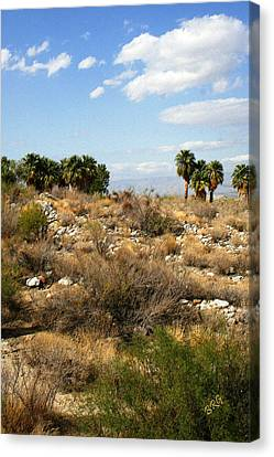 Palm Springs Indian Canyons View  Canvas Print by Ben and Raisa Gertsberg