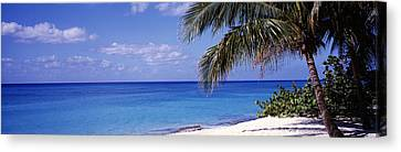 Palm Tree On The Beach, Seven Mile Canvas Print by Panoramic Images