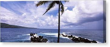 Palm Tree On The Coast, Honolulu Nui Canvas Print by Panoramic Images