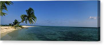Palm Tree Overhanging On The Beach Canvas Print by Panoramic Images