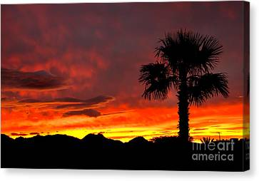 Palm Tree Silhouette Canvas Print by Robert Bales
