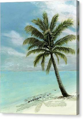 Palm Tree Study Canvas Print by Cecilia Brendel