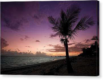 Palm Tree Sunrise Canvas Print by Sebastian Musial