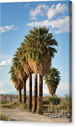 Palm Trees Canvas Print by Jane Rix