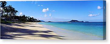 Palm Trees On The Beach, Lanikai Beach Canvas Print by Panoramic Images