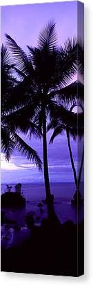 Palm Trees On The Coast, Colombia Canvas Print by Panoramic Images