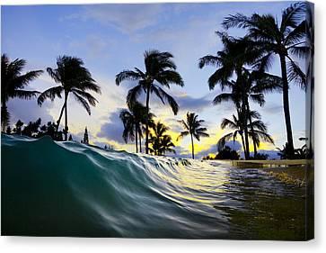 Palm Wave Canvas Print by Sean Davey