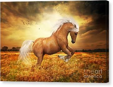 Palomino Horse Sundance  Canvas Print by Shanina Conway