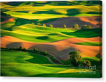 Palouse Fields Canvas Print by Inge Johnsson