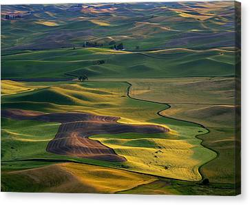 Palouse Shadows Canvas Print by Mike  Dawson