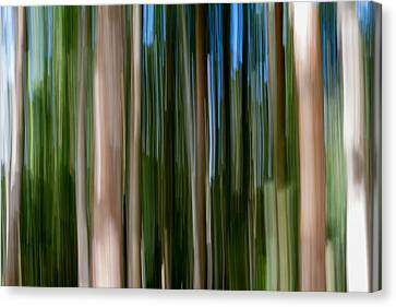 Panning Forest 2 Canvas Print by Stelios Kleanthous