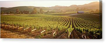 Panoramic View Of Vineyards, Carneros Canvas Print by Panoramic Images