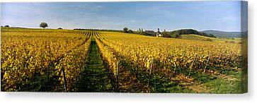 Panoramic View Of Vineyards, Schloss Canvas Print by Panoramic Images