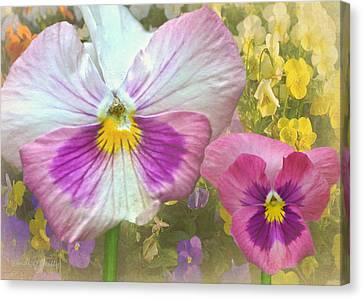 Pansy Duo Canvas Print by Sandi OReilly