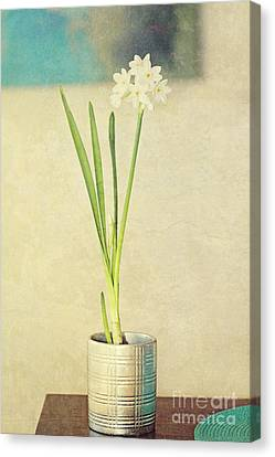 Paper Whites On Table Canvas Print by Susan Gary
