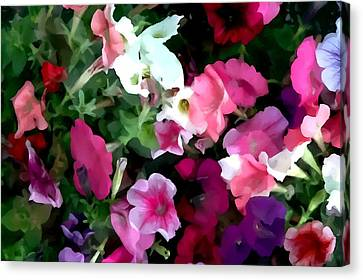 Parade Mix Petunia Canvas Print by Lanjee Chee
