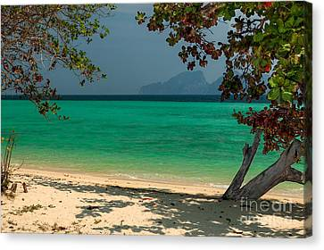 Paradise Found Canvas Print by Adrian Evans