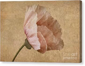 Parchment Canvas Print by John Edwards