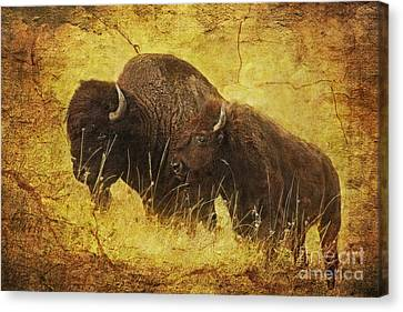 Parent And Child - American Bison Canvas Print by Lianne Schneider