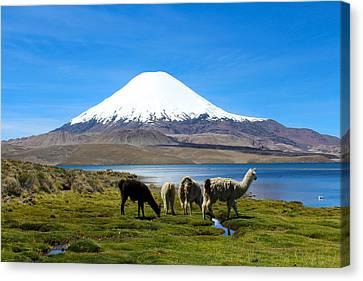 Parinacota Volcano Lake Chungara Chile Canvas Print by Kurt Van Wagner