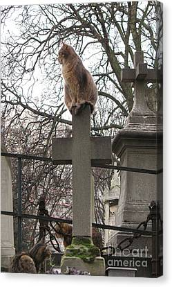 Paris Cemetery Cats - Pere La Chaise Cemetery - Wild Cats On Cross Canvas Print by Kathy Fornal