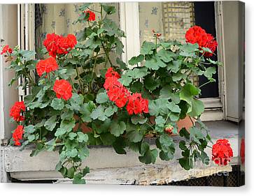 Paris Window Flower Box Geraniums - Paris Red Geraniums Window Flower Box Canvas Print by Kathy Fornal