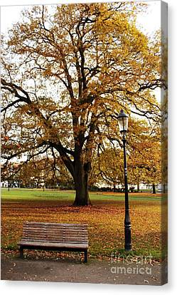 Park Life Canvas Print by Terri Waters