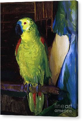 Parrot Canvas Print by George Wesley Bellows