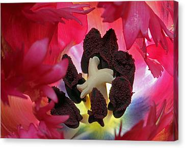 Parrot Tulip Swirl  Canvas Print by Juergen Roth