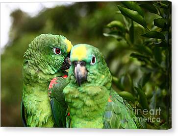 Parrot Whispers Canvas Print by James Brunker