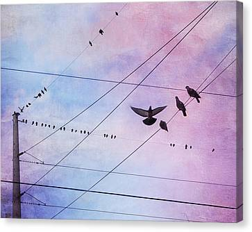Party Line Canvas Print by Amy Tyler