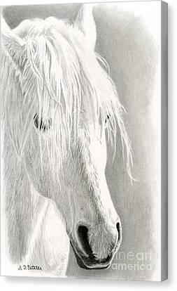 White Horse- Paso Fino Canvas Print by Sarah Batalka