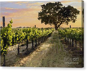 Paso Vineyard  Canvas Print by Sharon Foster