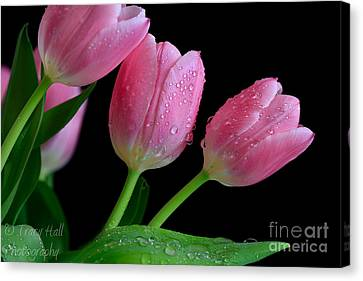 Passion For Pink Canvas Print by Tracy  Hall