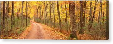 Path Hickory Run State Park Pa Usa Canvas Print by Panoramic Images