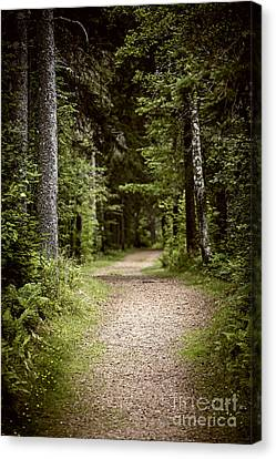 Path In Old Forest Canvas Print by Elena Elisseeva