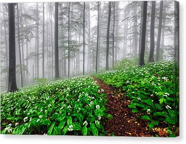 Path In The Mist Canvas Print by Evgeni Dinev