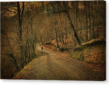 Path Canvas Print by Taylan Soyturk