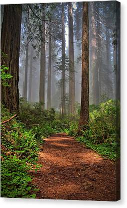 Path Thru The Redwoods Canvas Print by Michael  Ayers